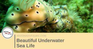 beautiful-underwater-sea-life