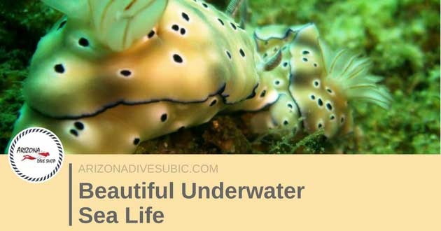Beautiful Underwater Sea Life